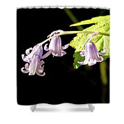 Bluebells Under The Sun Ray. Shower Curtain