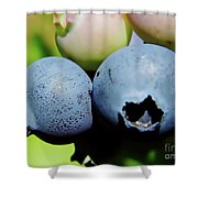 Blueberries Shower Curtain