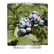 Blueberries On Blueberry Bush Shower Curtain