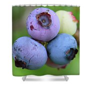 Blueberries On The Vine 2 Shower Curtain