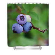 Blueberries On The Vine 3 Shower Curtain