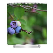 Blueberries On The Vine 4 Shower Curtain
