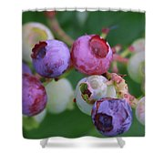 Blueberries On The Vine 5 Shower Curtain
