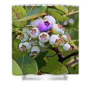 Blueberries On The Vine 7 Shower Curtain