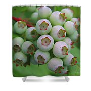 Blueberries On The Vine 9 Shower Curtain