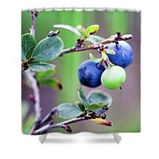 Blueberry Shower Curtain