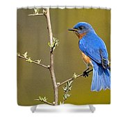 Bluebird Bliss Shower Curtain