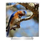 Bluebird Curiousity Shower Curtain