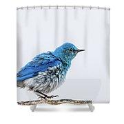 Bluebird Dances A Spring Jig Shower Curtain