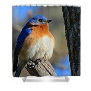 Bluebird Evening Shower Curtain