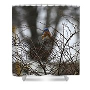 Bluebird In Briars Shower Curtain