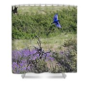 Bluebird Pair In Blickleton Shower Curtain