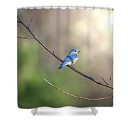 Bluebird Perched On A Tree Branch In The Sunlight Shower Curtain