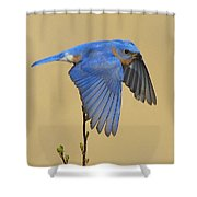 Bluebird Takes Flight Shower Curtain
