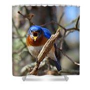 Bluebird Temper Shower Curtain
