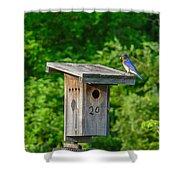 Bluebird With Grub Shower Curtain