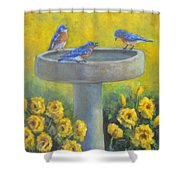 Bluebirds On Birdbath Shower Curtain