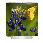 Bluebonnet And Butterfly Shower Curtain