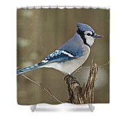 Bluejay 012 Shower Curtain