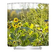 Bluejay And Sunflowers Shower Curtain