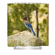 Bluejay Pondering Shower Curtain
