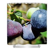 Blues In The Florida Berries Shower Curtain