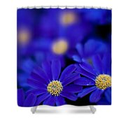 Bluey Gerbera Shower Curtain