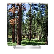 Bluff Lake Ca Fern Forest 3 Shower Curtain