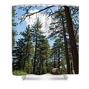 Bluff Lake Ca Through The Trees 4 Shower Curtain
