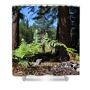Bluff Lake Forest Foliage1 Shower Curtain