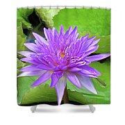 Blumen Des Wassers - Flowers Of The Water 17 Shower Curtain