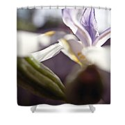 Blurred Iris Shower Curtain by Ray Laskowitz - Printscapes