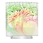 Blush Gerber And Rose Shower Curtain