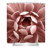 Blush Pink Succulent Plant, Cactus Close Up Shower Curtain