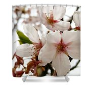 Blushed 2 Shower Curtain