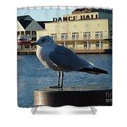 Boardwalk Seagull Shower Curtain