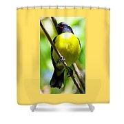 Boastful Bird Shower Curtain