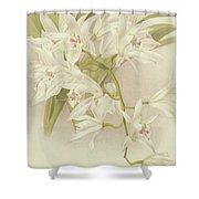 Boat Orchid  Cymbidium Shower Curtain