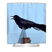 Boat Tailed Grackle Shower Curtain