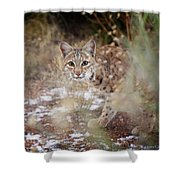 Bob On The Prowl Shower Curtain