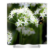 Bobby And Bug Shower Curtain