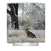 Bobcat And Heavy Frost Shower Curtain