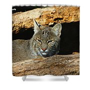 Bobcat Hiding In A Log Shower Curtain