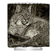Bobcat In Black And White Shower Curtain