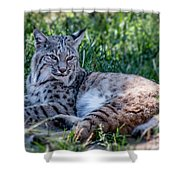 Bobcat In The Grass 2 Shower Curtain