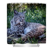 Bobcat In The Grass Shower Curtain