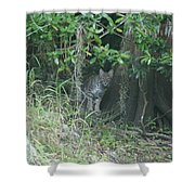 Bobcat In The Everglades Shower Curtain