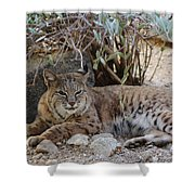 Bobcat Resting Shower Curtain
