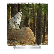 Bobcat Thoughts Shower Curtain