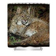 Bobcat Warming In The Autumn Sun Shower Curtain